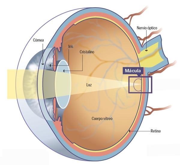 Baja visión en glaucoma